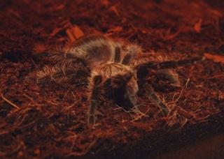 Паук в контактном зоопарке в Музее природы