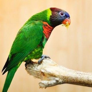 Контактный зоопарк в Музее природы