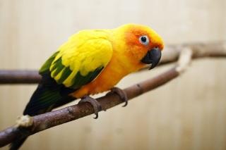 Прикольный жёлтый попугай в Костроме