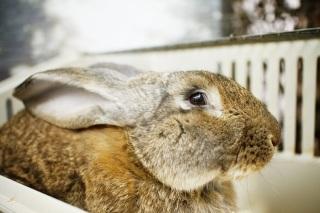 Кролик из костромского контактного зоопарка