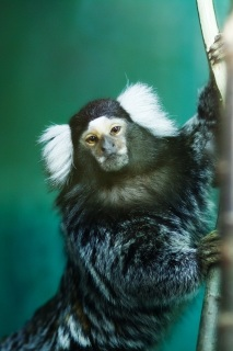 Обезьяна в контактном зоопарке в Костроме