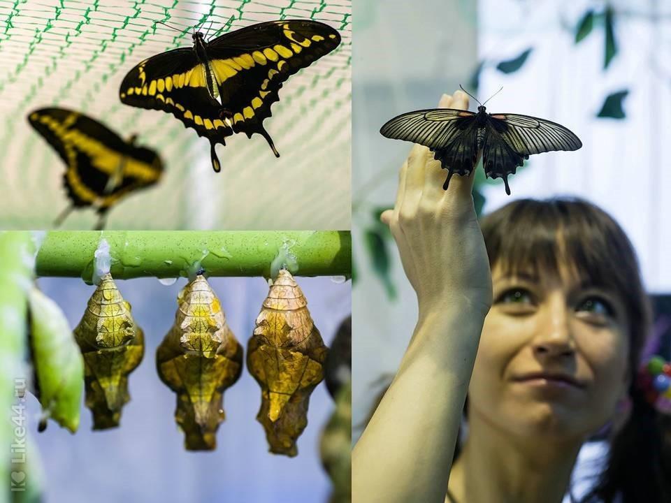 Бабочки в подарок тамбов 34