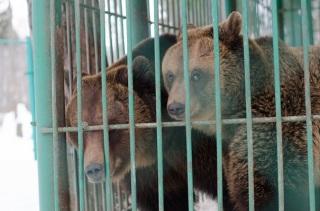 kostromskoy-zoopark 16
