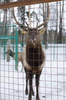 kostromskoy-zoopark 17