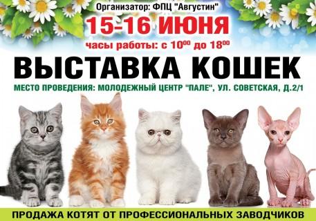 Афиша выставки Выставка кошек