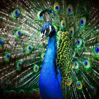 vystavka-ekzoticheskih-zhivotnyh-i-ptic 02