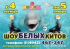 Шоу белых китов